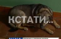 Чтобы обеспечить человеческие условия собакам, людей обрекли на зверские мучения.
