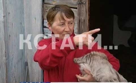 Кот, зараженный бешенством набросился на 6-летнего ребенка