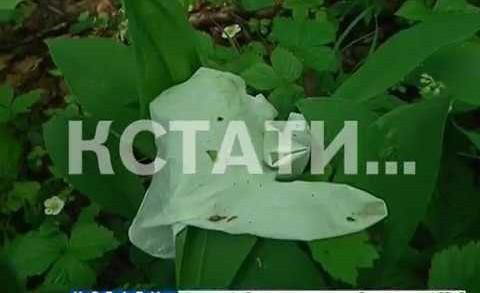 13-летний ребенок в Кстове стал жертвой нападения — ребенка нашли в лесу с проломленной головой