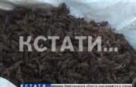 Браконьеры бросили на берегу более 100 килограммов раков
