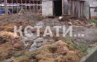 Коровья интоксикация в селе Сазоново, Сосновского района