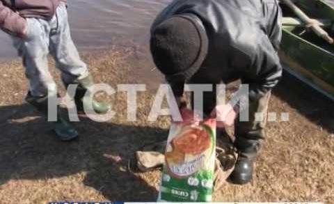 Расхитители рек задержаны в Нижнем Новгороде