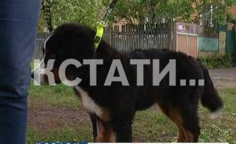 Живодерский скандал — заводчики обвинили новых хозяев щенка в издевательствах над животным