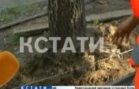 Деревовредительство в самом центре Нижнего Новгорода