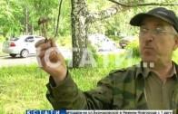 Вместо плодово-ягодного грибной сезон в самом разгаре в Нижегородской области