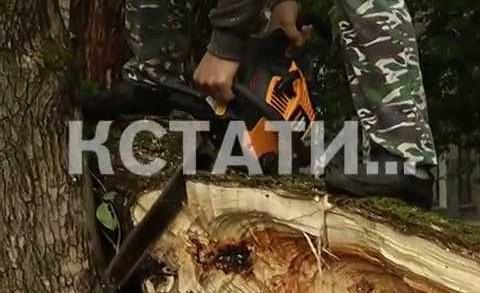 Южные районы Нижегородской области стали жертвами урагана