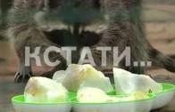 Нижегородский зоопарк сегодня превратился в кафе-мороженое