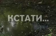 Заливные луга, утонувшие в канализации — зона отдыха превращается в городской туалет