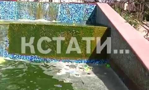 Зеленые воды, грязные берега — фонтан в Советском районе превратился в болото.
