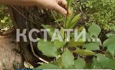 Борьбу за уникальные растения, обнаруженные в брошенном палисаднике, начали экологи