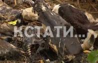 Ферма ужасов, где массово гибнут животные, появилась в Кстовском районе 1 152 просмотра