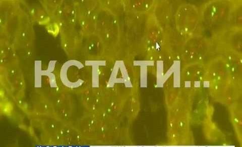 FISH-диагностика опухолей молочной железы появилась в Нижнем Новгороде