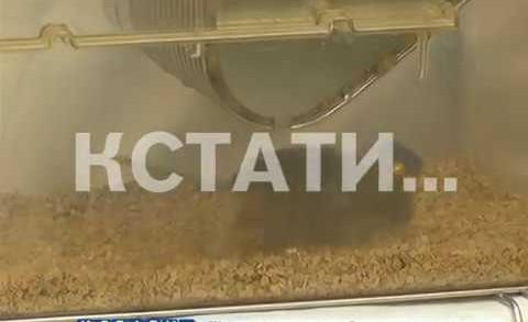 Внутреннюю броню против опасной болезни ищут нижегородские ученые