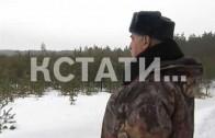Нижегородские лесничии открыли охоту на елочных браконьеров