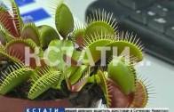 Нижегородские ученые научились разговаривать с растениями