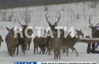 Перепись диких зверей началась в нижегородских лесах