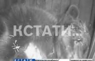 Зоологи установили камеру в медвежье берлоге