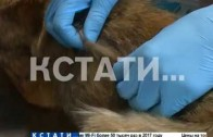 Зоозащитники пытаются спасти истощенных собак из рабства