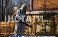 Нижегородские парки облили ядом, чтобы они были безопаснее