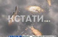 Массовый мор рыбы и черная вода — экологическое бедствие в Березовой пойме
