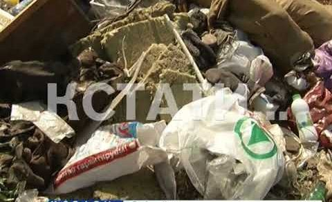 Жители Богородска при содействии коммунальщиков превратили город в мусорную столицу области