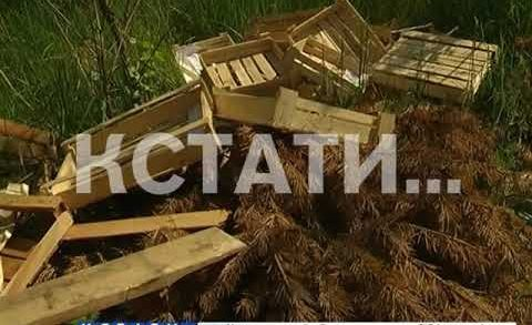 Торговцы с Бурнаковского рынка, на поток поставили вывоз мусора в прибрежную зеленую зону