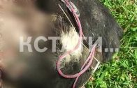 Чтобы отомстить соседу, житель Красных Баков замучил его собаку до смерти