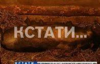 Из-за вспышки африканской чумы в Сосновском районе решено уничтожить поголовье свиней