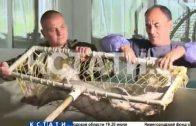 Нижегородская область может стать рыбным регионом