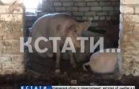 Животные голодают, а соседи страдают — фермеры-нелегалы отравили жизнь целому поселку