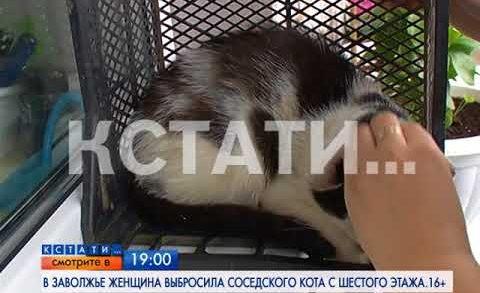 АНОНС: В Заволжье женщина выбросила соседского кота с шестого этажа