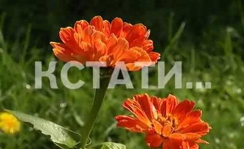 Цветущий сад среди городских джунглей создала жительница Нижегородского района