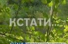 Грибной сезон отменяется — засушливое лето оставит грибникам только сыроежки