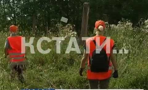 Из-за шумихи в интернете добровольцы перестают искать Машу Ложкареву