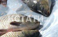 Нижегородская область станет рыбным местом