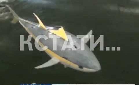 Нижегородские ученые замаскировали подлодку под тунца