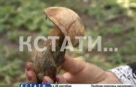 Очень тихая охота с опозданием началась в нижегородских лесах