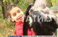 Ручная ворона появилась в Московском районе