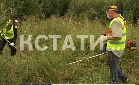 В поисках бесследно пропавших девочек волонтеры начали выкашивать заросшие пустыри