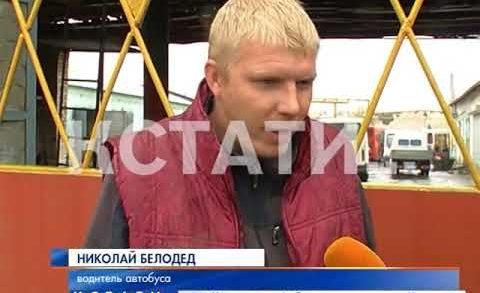 Лось бросился под колеса автобуса в Борском районе