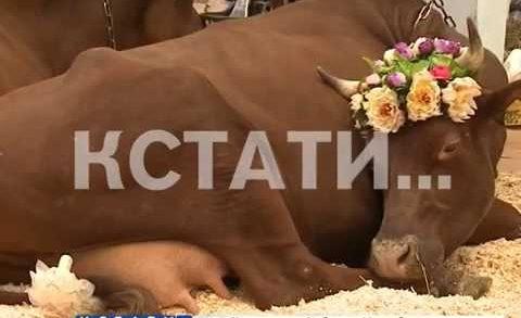 Нижегородские фермеры и сельхозпредприятия приняли участие в выставке «Золотая осень»