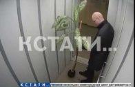 Незнакомец с диффенбахией украл цветок и стал кататься с ним в лифте