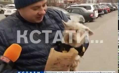 Собачье дело — тенденции гигиены домашних животных дошли до Нижнего Новгорода