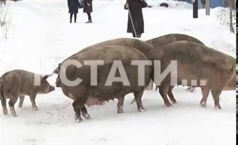 Оголодавшие животные сбежали от «черных» фермеров и запугали жителей деревни