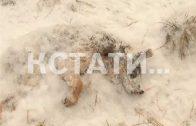 Суд Линча в концлагере — неизвестные подожгли приют, где издевались и убивали животных