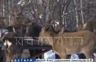 15 «бэмби» поселились в Дальнеконстантиновском районе