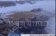 Жители Лысково напуганы разрастающимся кладбищем павшего скота.