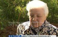 Найденные в Нижнем Новгороде останки поэта Серебряного века эксгумировали родственники