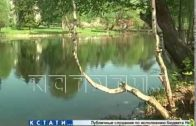 Нижегородские леса взяли под особый контроль