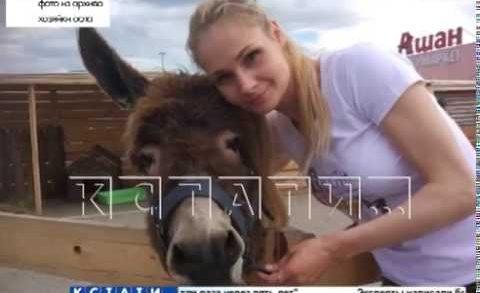 Осел раздора в зоопарке стал причиной скандала и будущих судебных исков